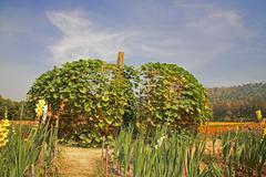 Big artificial pumpkin at Jim Thomson farm - stock photo