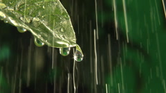 Rain drops dripping off end of leaf, clean fresh water, rain in background - stock footage