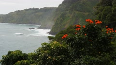 Maui's honomanu bay and tulip tree Stock Footage
