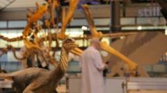 Dinosaur Museum - Brussels 008 Stock Footage