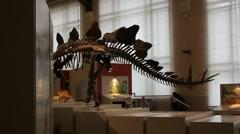 Dinosaur Museum - Brussels 019 Stock Footage