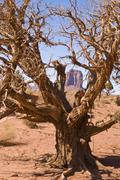 Tree monument valley Stock Photos