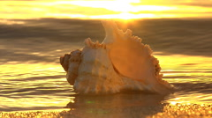Water laps around shell at shore at sunset, starting  pulling back - stock footage