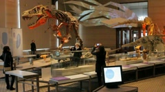 Girl Taking Picture - Dinosaur Museum - Brussels 003 Stock Footage