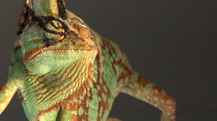 Male veiled chameleon eye glancing out of frame, opens mouth Stock Footage
