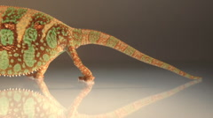 Slow pan side view of Male veiled chameleon Stock Footage