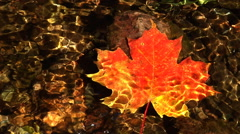 Water trickles around red/yellow maple leaf in stream Stock Footage