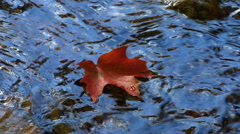 maple leaf floats down clear stream - stock footage
