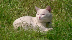 Cat sleeping in the grass Stock Footage