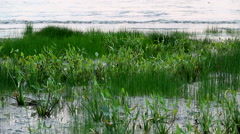 Waterweeds and waves Stock Footage