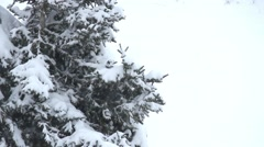 Firs in the winter - stock footage