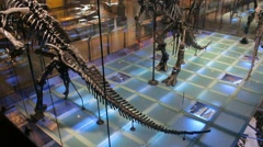 Dinosaur Museum - Brussels - Camera Panning Up 002 Stock Footage