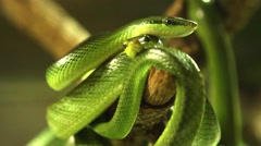 Snakes in a terrarium Stock Footage