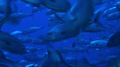 Fishes faces in Andaman Sea Stock Footage