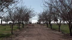 A person takes a stroll along a tree-lined dirt road of a cemetery. - stock footage