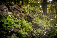 Stock Photo of Closeup of some vegetation on stones