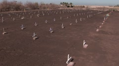 A cemetery contains rows of graves marked with small white crosses. - stock footage