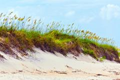 Stock Photo of grass on a beach during stormy season