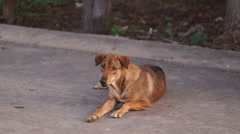 Stray Dog Stock Footage