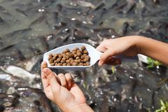 Pellet fish food. - stock photo