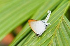 Butterfly in pang sida national park  thailand - stock photo