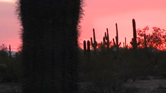 Red desert sunset with a cactus field landscape. Stock Footage