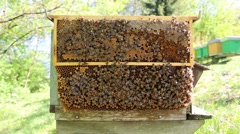 Frame trap with bees Stock Footage