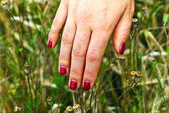 Finger with red fingernail in the meadow Stock Photos