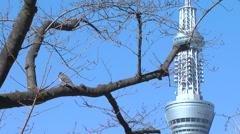 Tokyo sky tree,pigeon Stock Footage
