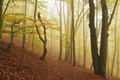 Autumn forest around Karlovy Vary, Czech Republic, Europe - stock photo