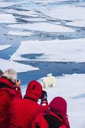 Polar bear (Ursus maritimus) on a ice floe in the Arctic shelf, Svalbard, Arctic - stock photo