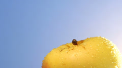 Slow pull back from stack of rotating yellow apples Stock Footage