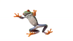 Red eyed green tree frog walking on clear surface Stock Footage