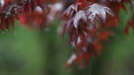 Stock Video Footage of Rain falls upon autumn leaves.