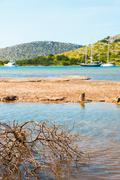 Sandy coast with dry bush in Adriatic sea  - stock photo