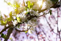 Small white flowers in spring Stock Photos