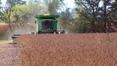 Soy Bean Farming 2 Stock Footage