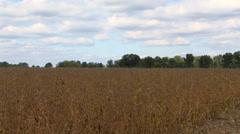 Soy Bean Farming 11 Stock Footage
