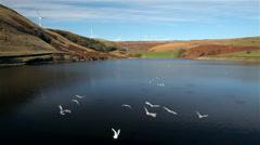 BIRDS ON NADEN LOWER RESERVOIR & WIND TURBINES, LANCASHIRE, Stock Footage