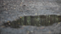 A woman jogs across a puddle reflecting the image of dozens of tress. Stock Footage