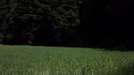 Stock Video Footage of A young woman runs through a grassy field carrying a yellow parasol.
