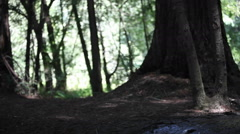 A woman sits alone in the forest and meditates. Stock Footage