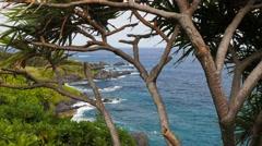 Maui hana coastline and pandanus tree Stock Footage