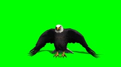 eagle fly landing 1 - green screen - stock footage