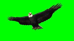 Eagle in gliding 1 - green screen Stock Footage