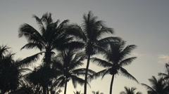 Ngwe Saung, Silhouettes of palm trees at sunrise Stock Footage