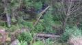 4k Autumn nature mountain range Harz tilt 180 degrees 4k or 4k+ Resolution