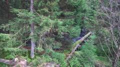 4k Moory autumn nature low mountain range Harz panning Stock Footage
