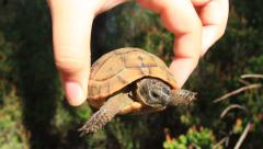 Baby turtle in a child hand Stock Footage