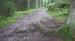 4k Pathway with roots and little stream moory Harz forest - stock footage